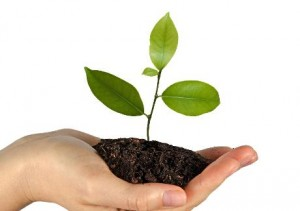 Plant d'arbre