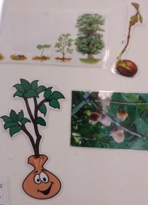 photo un arbre, une vie (CPE)